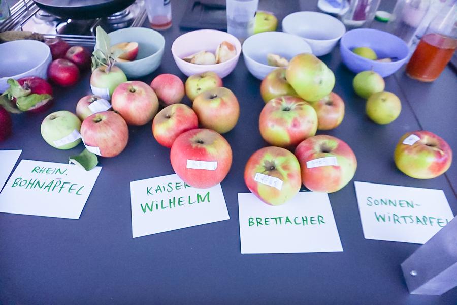 Apfelsorten mit Namensschildern